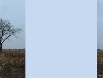 Photo Products - Bare Tree With Light Blue