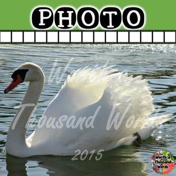 Photo: Swan