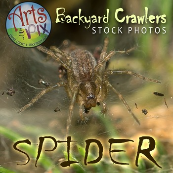 Photograph - Spider - arachnid - stock photo