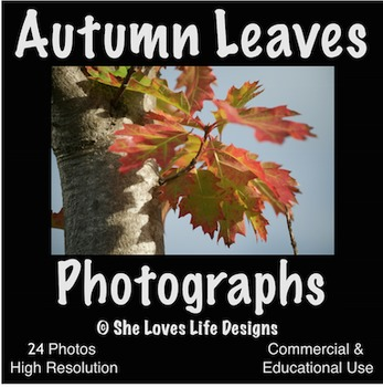 Photographs AUTUMN LEAVES Photos Fall
