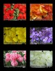 Color Photos (BUNDLE)