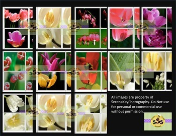 Photos of Flowers