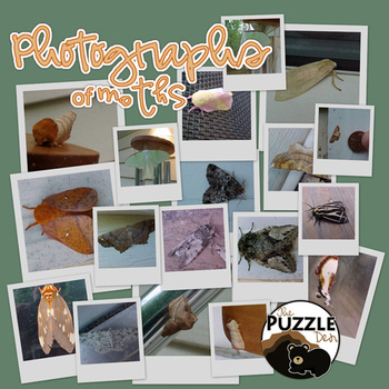Photos of Moths