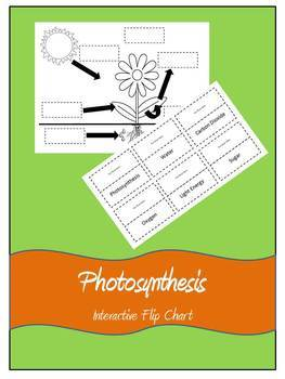 Photosynthesis Flip Chart