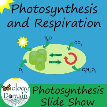 Photosynthesis Slide Show