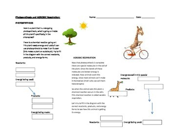 Photosynthesis and Aerobic Cellular Respiration (Reactant/