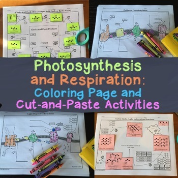 Photosynthesis and Respiration Coloring Activity Bundle fo