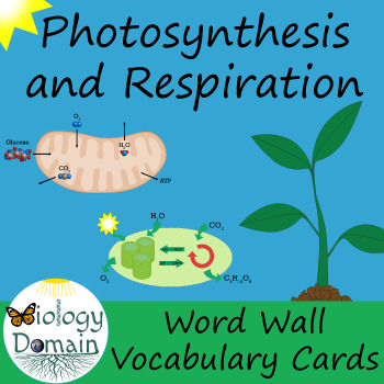 Photosynthesis and Cellular Respiration Vocabulary Cards