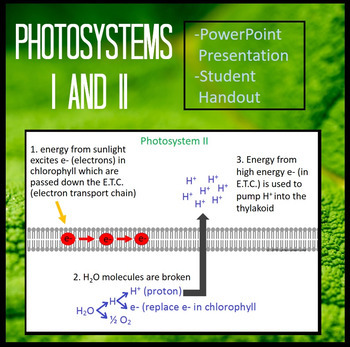 Photosystems I and II of Light Dependent Reactions of Phot