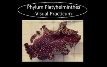 Phylum Platyhelminthes (Flatworms) Visual Practicum PowerPoint