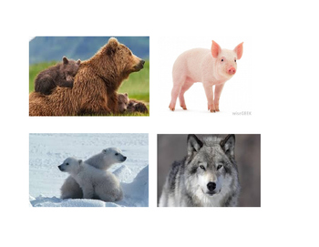 Pictures of animals and items