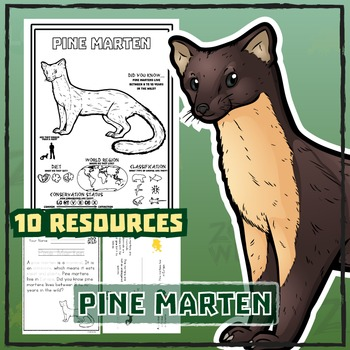 Pine Marten -- 10 Resources -- Coloring Pages, Reading & A