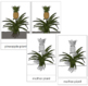 Pineapple Plant Nomenclature Cards