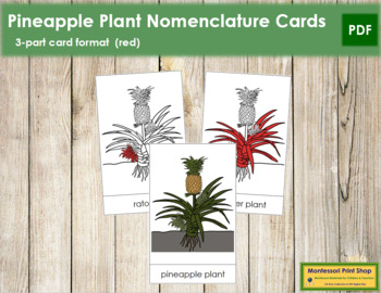 Pineapple Plant Nomenclature Cards - Red