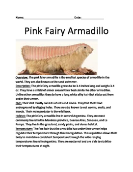 Pink Fairy Armadillo - Informational article facts informa