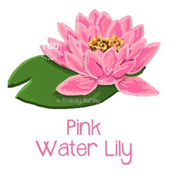 Pink Water Lily, water lily clip art, water lily Printable