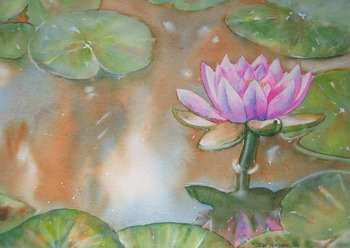 Pink Waterlily painting