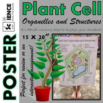 Plant Cell Organelles and Structures Coloring Poster for R