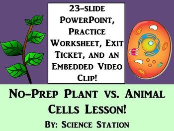 Plant Cells vs. Animal Cells