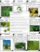 Plant Classification Scavenger Hunt - A great tool to Revi