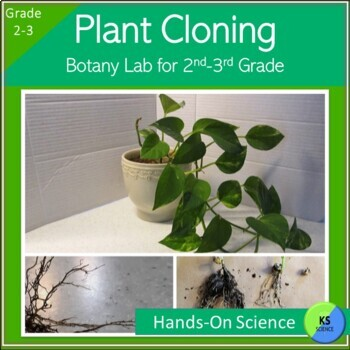 Plant Cloning:  Experimenting with Rooting Hormone for 2nd