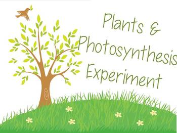 Plant Growth Lab Activity