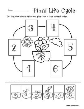 Plant Life Cycle - Cut / Paste Worksheet
