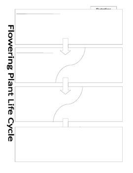 Plant Life Cycle Diagram! Graphic Organizer!