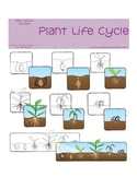 Plant Life Cycle Graphics