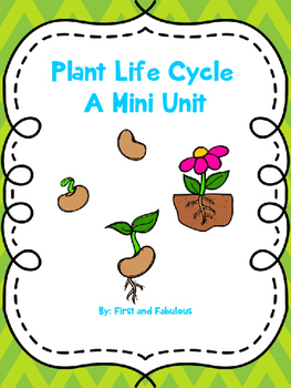 Plant Life Cycle Mini Unit