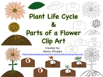 Plant Life Cycle & Parts of a Flower Clipart