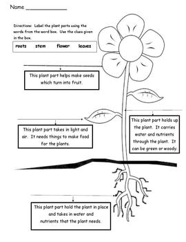 Plant Parts - Differentiated Instruction - Tiered Worksheets