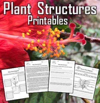 Plant Structures Printables