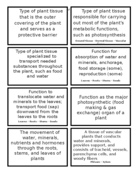 Plant Structures and Functions Flash Cards (10B)