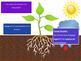 Plant Transport (Photosynthesis) Animation