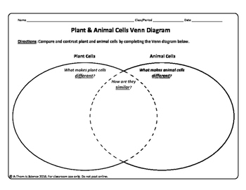 Plant and Animal Cell Venn Diagram