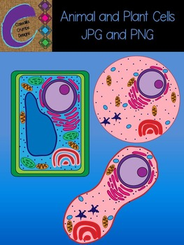 Plant and Animal Cells Cell Clip Art Pictures Science JPG