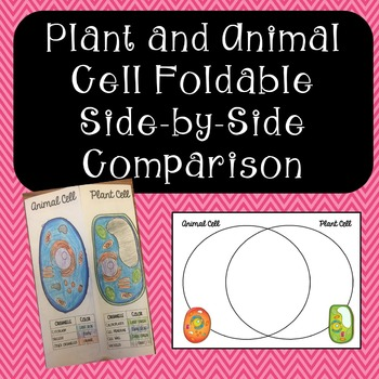 Plant and Animal Cells Side-by-Side Comparison with Venn Diagram