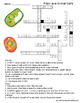 Plant and Animal Cells Vocabulary Crossword Puzzle *Freebie*