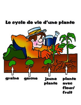 Plant cycle French