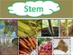 Plant parts - learning about stems, roots, flowers, and leaves