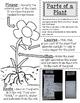 Plants - 4.4