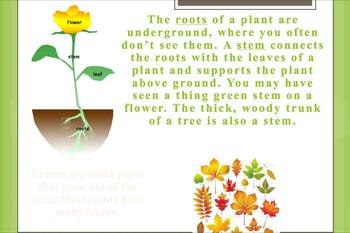 Plants Bundle, Lessons 1-4