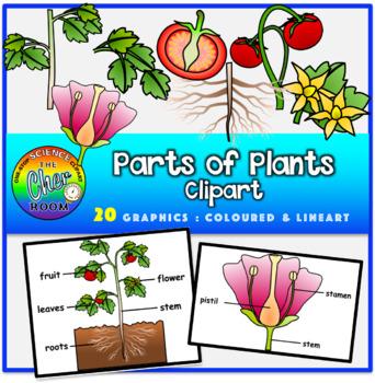 Plants Clipart- Parts of Plants