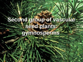 Plants: Gymnosperms