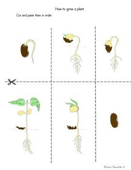 Plants    How grow plant