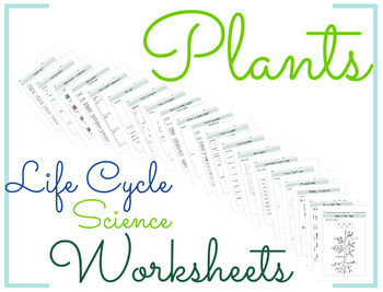 Plants Life Cycle Science Worksheet 2