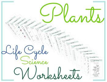 Plants Life Cycle Science Worksheet 6