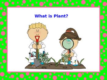 Plants Plants Everywhere