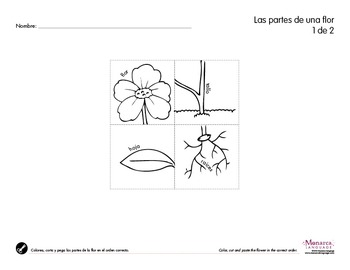 Life Cycle of Plants in Spanish